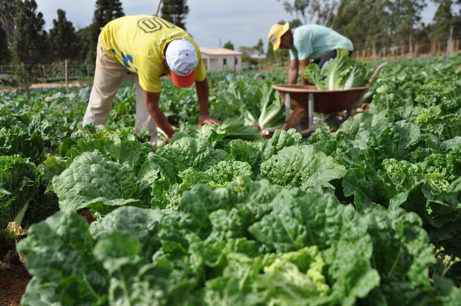 AGRICULTURA: SEAGRI IMPLANTA MAIS TRÊS HORTAS COMUNITÁRIAS NOS RESIDENCIAS TOCANTINS, JARDIM DO ÉDEN E TIRADENTES