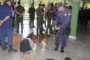 SEGURANÇA: GUARDA MUNICIPAL REALIZA TREINAMENTO DE OPERAÇÕES COM CÃES