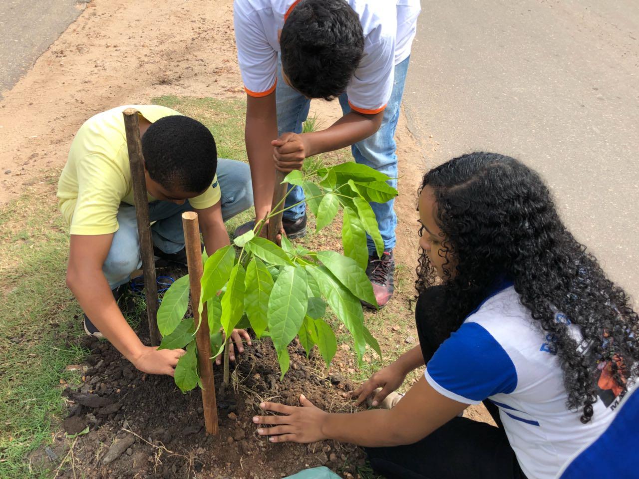 MEIO AMBIENTE: SEMMA E ALUNOS REALIZAM PLANTIO DE IPÊ NA AVENIDA BOA ESPERANÇA