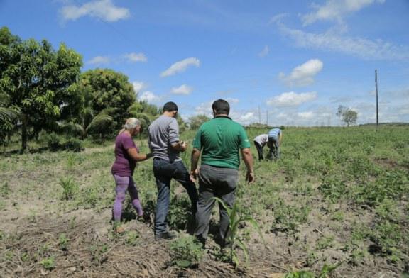 AGRICULTURA: MECANIZAÇÃO AGRÍCOLA É AFETADA PELA FALTA DE COMBUSTÍVEL