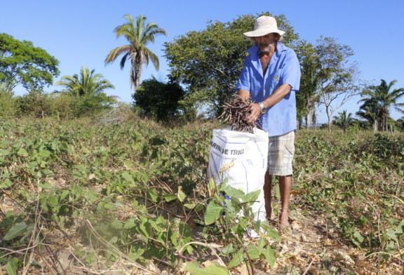AGRICULTURA: PEQUENOS AGRICULTORES ADEREM AO PROJETO FEIJÃO BIOFORTIFICADO