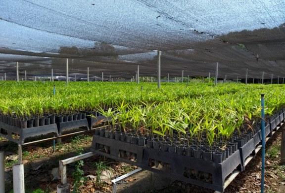 AGRICULTURA: VIVEIRO TEM PRODUÇÃO RECORDE EM 2018