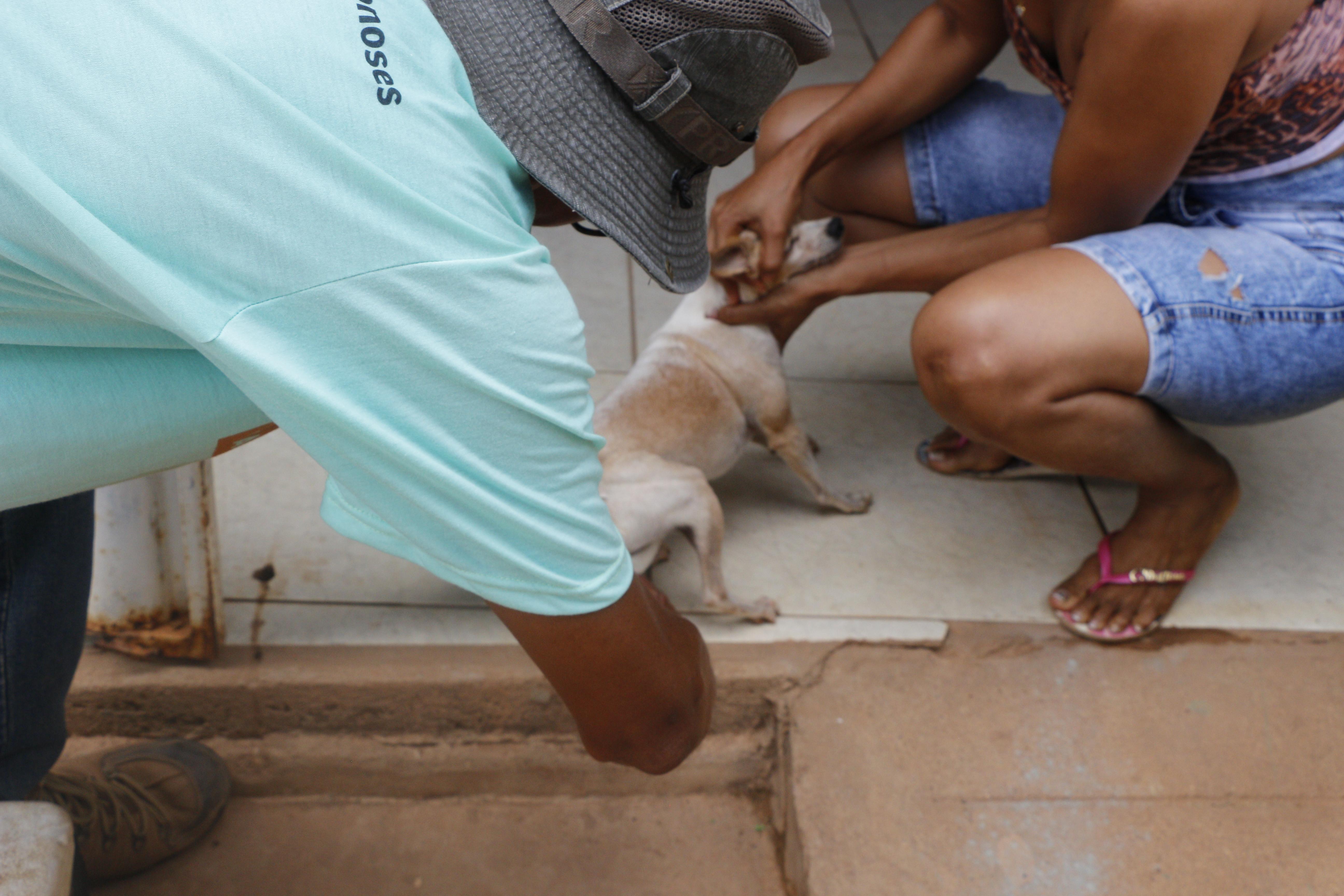 VACINAÇÃO ANTIRRÁBICA: CERCA DE 20 MIL ANIMAIS JÁ FORAM VACINADOS EM MARABÁ